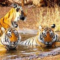 Jaipur-Ranthambore Weekend Tour