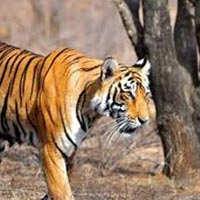 Ranthambore Weekend Package