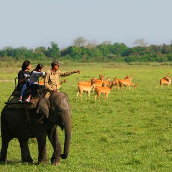 Shillong-Kaziranga Package Tour