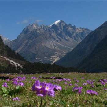 Gangtok Yumthang Tour