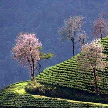 Gangtok Kalimpong Pelling Darjeeling Trip Tour