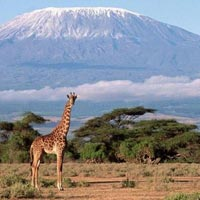 Kilimanjaro Trekking via Machame Route Tour
