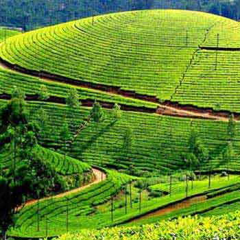 Kerala - a Lovers Paradisetour