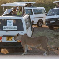 3 Nights 4 Days Masai Mara and Lake Nakuru Safari Tour