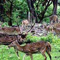 Kathmandu & Nepalgunj (Bardia National Park) Tour