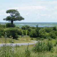 Best of Botswana 5 Nights Tour