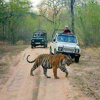 Corbett Weekend Safari Tour