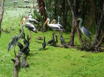 Kochi - Munnar - Kumarakom - Mararikulam - KochiTour