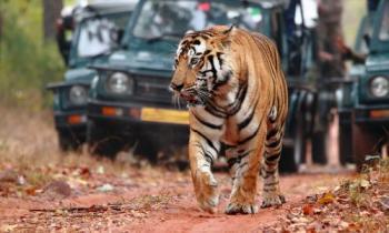 Wildlife Tour Jaipur - Ranthambore