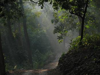 1 Night Package Holiday Forest