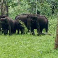 Short Escape to Bandipur National Park