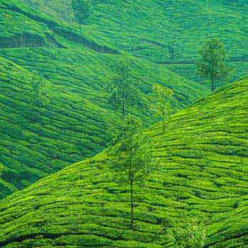 Kerala Holiday Package 11 Nights & 12 Days Tour