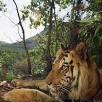 Siliguri- Nepal-Siliguri Tour