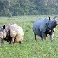 Kaziranga Rhino Safari with Sundarban Tiger Tour