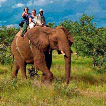 Corbett Wildlife Safari