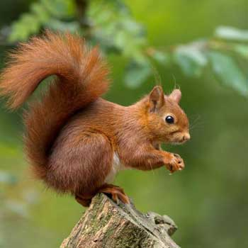 Squirell Jungle Stay - Dandeli Tour