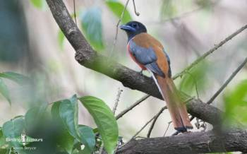 Birding Tour: Eaglenest Wildlife Sanctuary and Kaziranga National Park Package