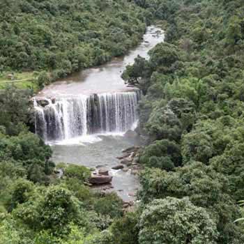 Assam 4N/5D Tour