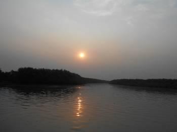 Mangrove Safari  - Sundarban