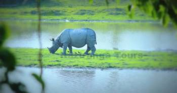 Wildlife and Tribes of Northeast India Tour Package