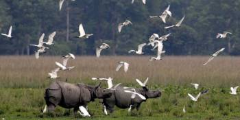 Wildlife and Tribes of Northeast India Package