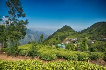 Tea Plantation Stays in Assam Tour Package
