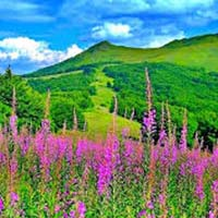 05 Nights - Valley of Flowers Tour