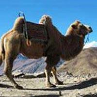 07-Nights Ladakh Tour