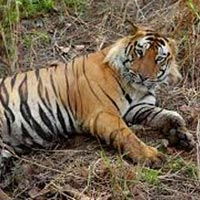 Odisha (Orissa) Wildlife Tour
