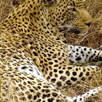 6 Days Trip To Serengeti And Ngorongoro Tour