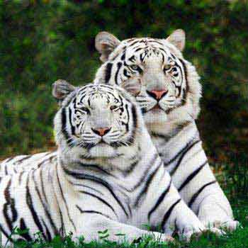 White Tiger With World Heritage 5 Nights/ 6Days Package