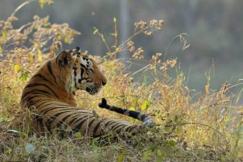 02 Nights & 03 Days Get Krazt at Kanha Tour Package