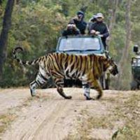 Bandhavgarh Wildlife Century Tour