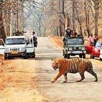 Kanha, Bandhavgarh, Jabalpur Tour Package
