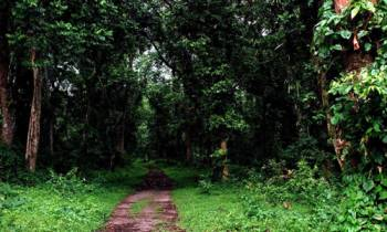 Jaldapara - Lataguri Tour