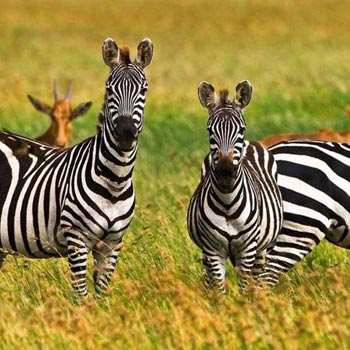 Budget Tanzania Lodge Safari Tour