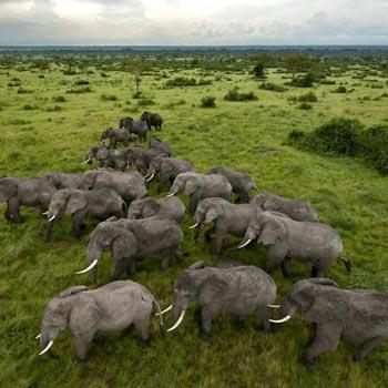 Serengeti to Ngorongoro conservation Area Tour