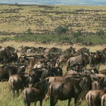 7 Days/ 6 Nights Kenya Lodge Safari Itinerary Tour
