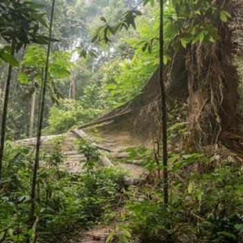 Taman Negara National Park Package