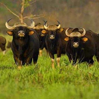 Dooars Wildlife Package