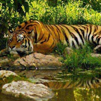 Sundarban 3N/4D Package