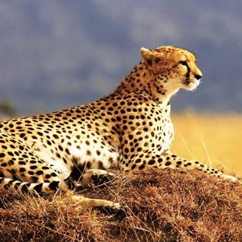 Masai Mara Adventure Safari Tour