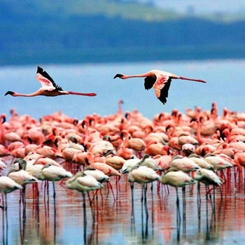 Great Rift Valley Lakes and Masai Mara Tour