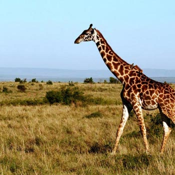 Magical Tanzania Safari Tour