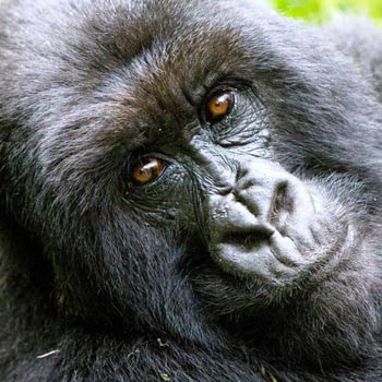 Queen Elizabeth & Gorilla Tracking Tour