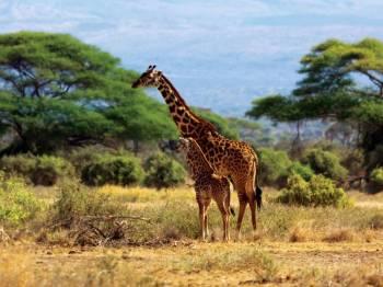 Magical Kenya Tour