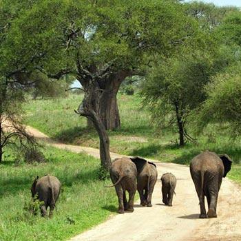 3 Days / 2 Nights Safari To Tarangire, Ngorongoro And L/Manyara.