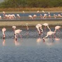 Gujarat Wild With Ranna of Kutch Tour