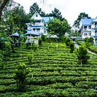 Munnar Hills Tour