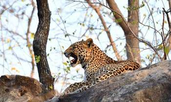Jabalpur to Kanha Tour Package